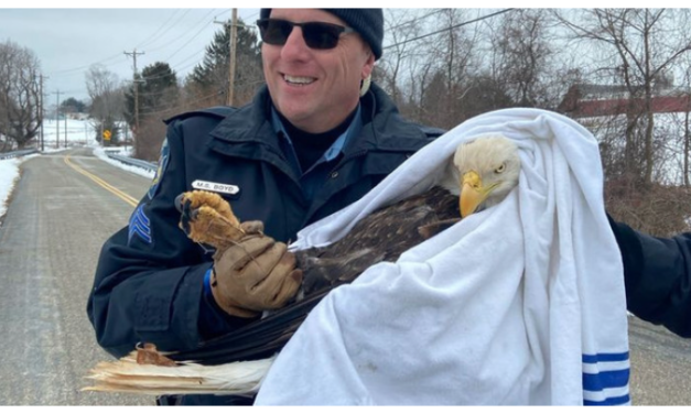Harford County Sheriffs Save Injured Bald Eagle
