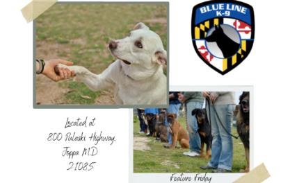 Blue Line K9 Dog Training – Feature Friday